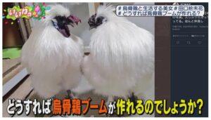ほかにも「鳥骨系音楽グループうこっかーず!」というのを、新堂シンディさんという男性と2羽の烏骨鶏とやっている。