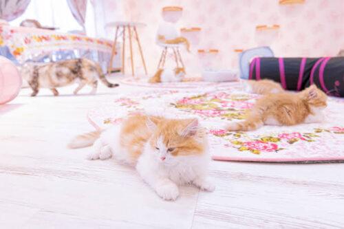 猫カフェ猫好き 文田健一郎